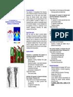 Brochure CFD2PF 2011