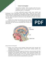 Cairan Cerebrospinal