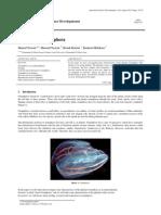 The Phylum Ctenophora