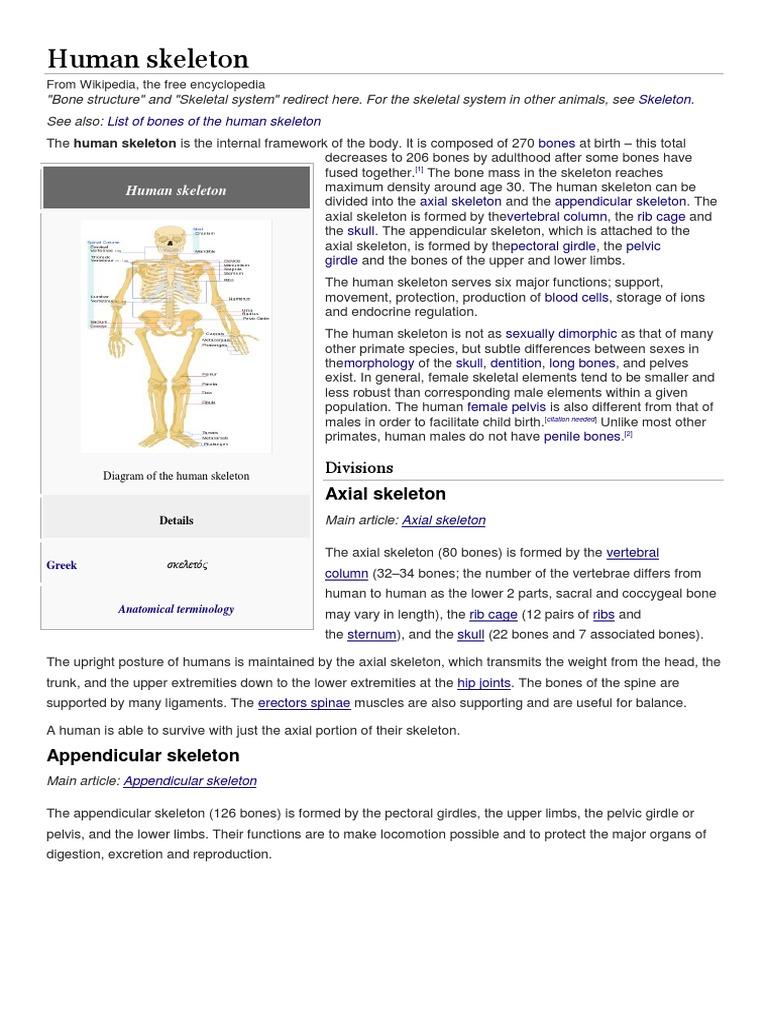 Human Skeleton Pelvis Bone