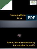 Potenciales de Membrana y Potenciales de Acción, Dr. Johnnathan Molina