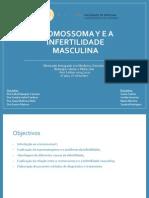 Cromossoma Y e a Infertilidade