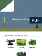 2. clasificacion plantas
