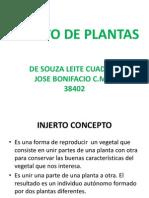 Injerto de Plantas 2