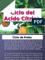 Ciclo de Krebs.ppt
