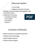 muscle powerpoint