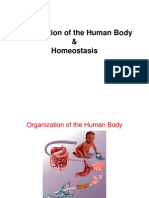 Lecture 2 - Homeostasis