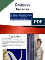 Cestodes