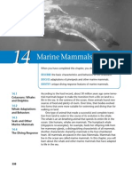 Marine Mammels