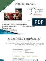 ALCALÓIDES+TROPÂNICOS
