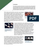28feat Evol Modern Humans-3010