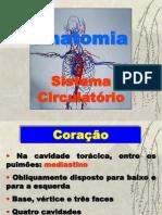 Anatomia - Sistema Circulatório