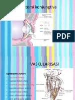 anatomi conjuctiva