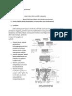 Embriologi Kulit Dan Derivatnya