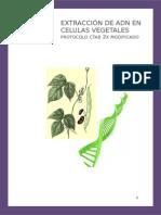 Extraccion de Adn en Celulas Vegetales