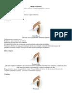 vet Oftalmologia conceitos