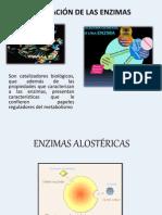 REGULACION EZIMATICA