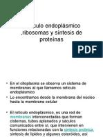 Retículo endoplásmico ,ribosomas y síntesis de proteínas