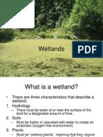 Wetlands B