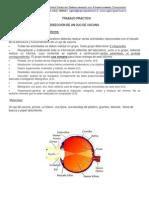 Guía disección del ojo.docx