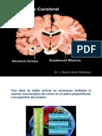 9= Corteza Cerebral.pptx
