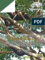 Forest Honey,, Health and Nutrition -Madhu Duniya 2
