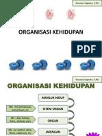 organisasi-kehidupan_2