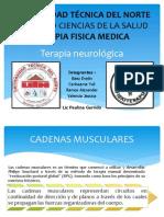 Cadena Anterior Muscular