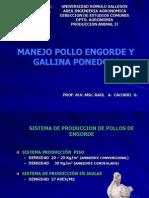 manejopollosyponedoras-090411112608-phpapp02
