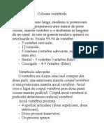 Anatomie lucrare practica, curs  3