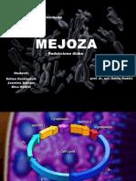 Mejoza - PP Presentation