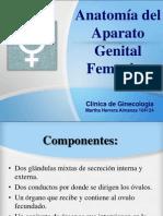 Anatomia Femeninos