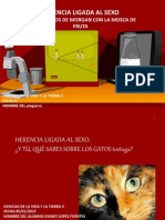 HERENCIA LIGADA AL SEXO Morgan CVT-2