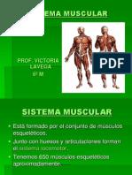 sistemamuscularterminado-121018175543-phpapp02