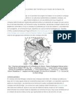 Trilobites BlogDatación y correlación de estratos del Cámbrico por medio de biofacies de trilobites.