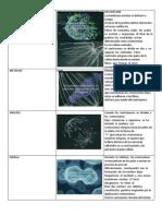 Actividad Mitosis y Meiosis