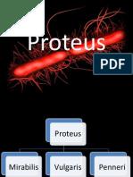 Proteus, Shigella, E colii
