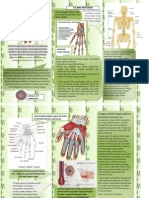 Anatomi Telapak Tangan Serta Jari