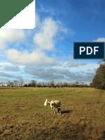 Zero Waste at White Oak Pastures