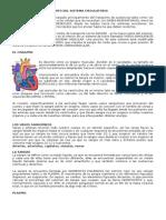 Anatomía y Funcionamiento Del Sistema Circulatorio