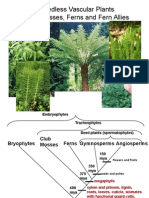 Lecture20 Ferns