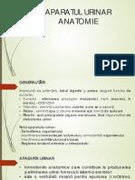 APARATUL URINAR.pdf