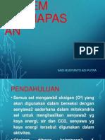 Anatomi & Fisiologi Sist. Pernafasan