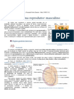 Anatomia Do Sistema Reprodutor - Fernando N. Zanette 2