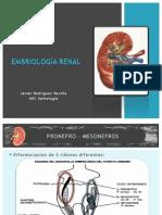 3 Embriologia Renal Eq 5