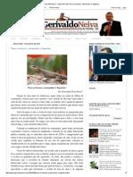 Gerivaldo Neiva - Juiz de Direito_ Para Os Bancos, Consumidor é Lagartixa