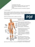 Muschii Corpului Uman