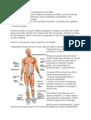 helminti în mușchii umani