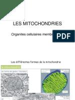 mitocondria FR.ppt