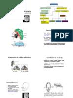 CLASE 5 Gastrulacion + anexos.pdf
